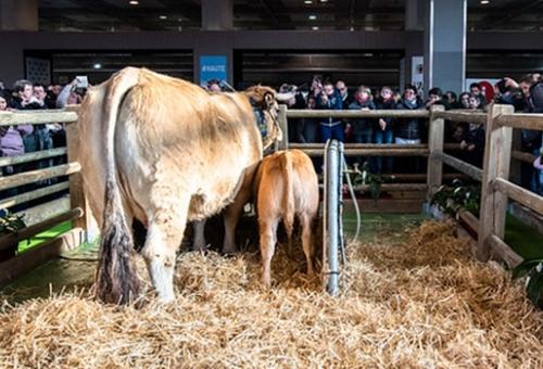 Salon international de l\'agriculture de Paris 2020
