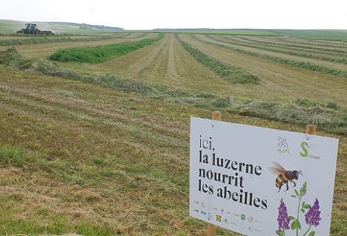 Les agriculteurs marnais aux petits soins des abeilles