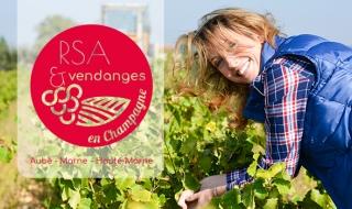 RSA et vendanges, une récolte 100% gagnante