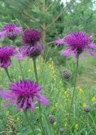 Portes ouvertes dans les Jardins : Jardin Salix-malva