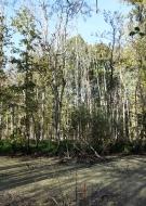A la découverte des zones humides de la forêt