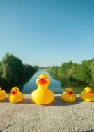 Duck Race !
