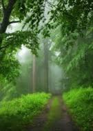 Exposition : Admirer la Nature !
