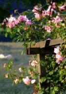 Rendez-vous aux jardins & Fête de la Rose