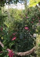 Rendez-vous aux Jardins : Jardin de Maëlys