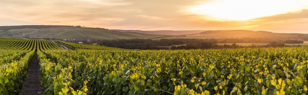 La Champagne, terre de réconciliation